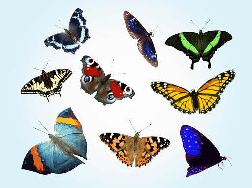 Butterflies Community Social Group